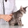 Ветеринарные клиники в Беляевке